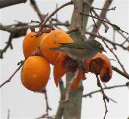 birdtree2