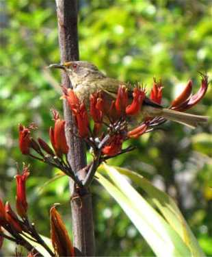 birdtree3