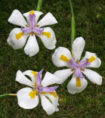 flower-di