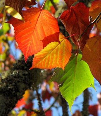 mclaren-autumn