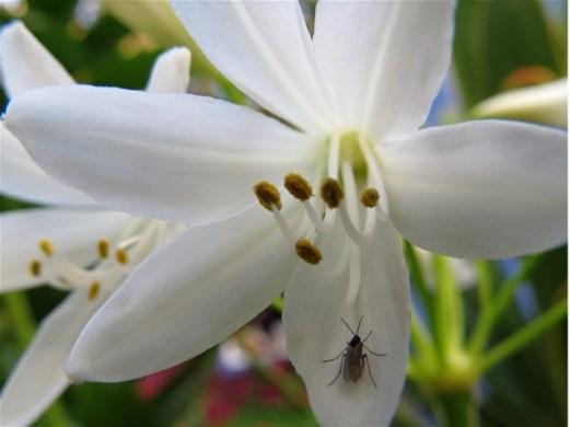 aggy-white