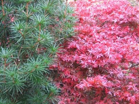 appleton-pine
