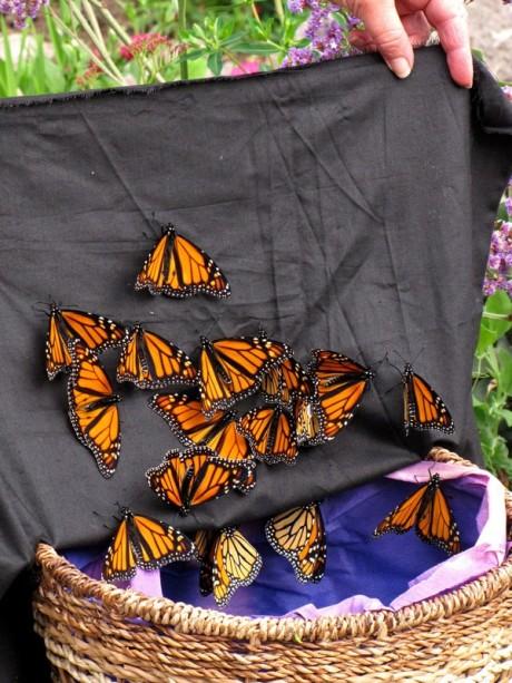 quarry-monarch release