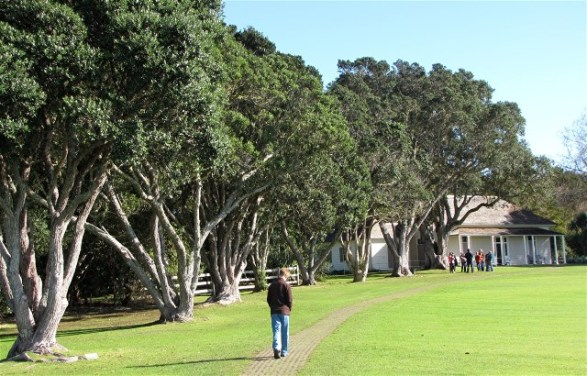 trees-waitangi