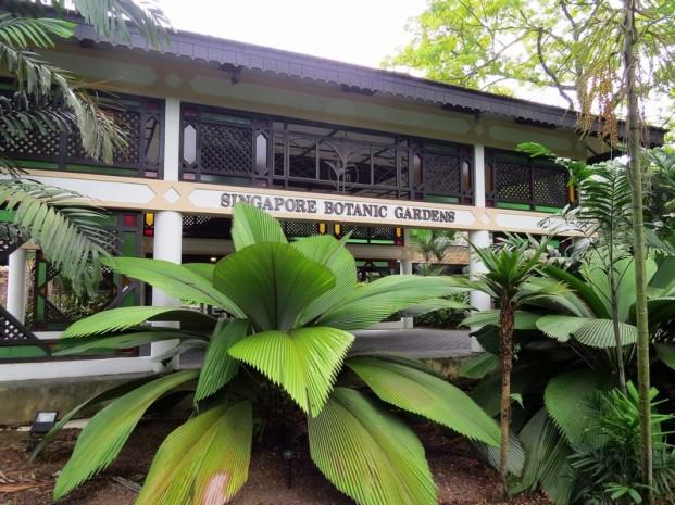 botanic-joey palm3 - Copy