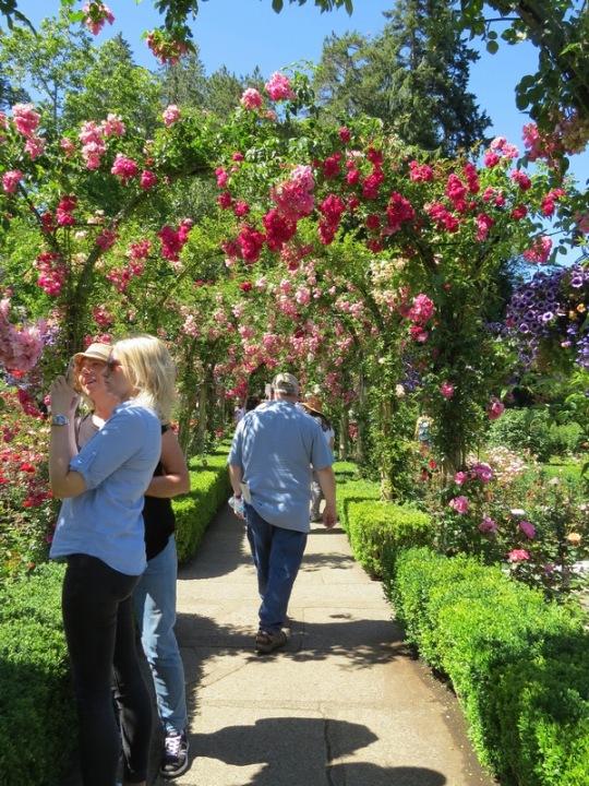 butchart-roses
