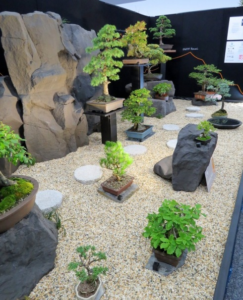 bonsai-copy